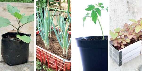 Jenis Sayuran Berdasarkan Tempat Tumbuhnya